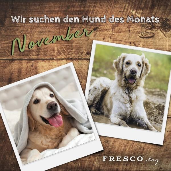 Aufruf_Hund_des_Monats_November