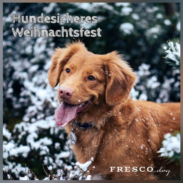1202_Hundesicheres-Weihnachten_Facebook