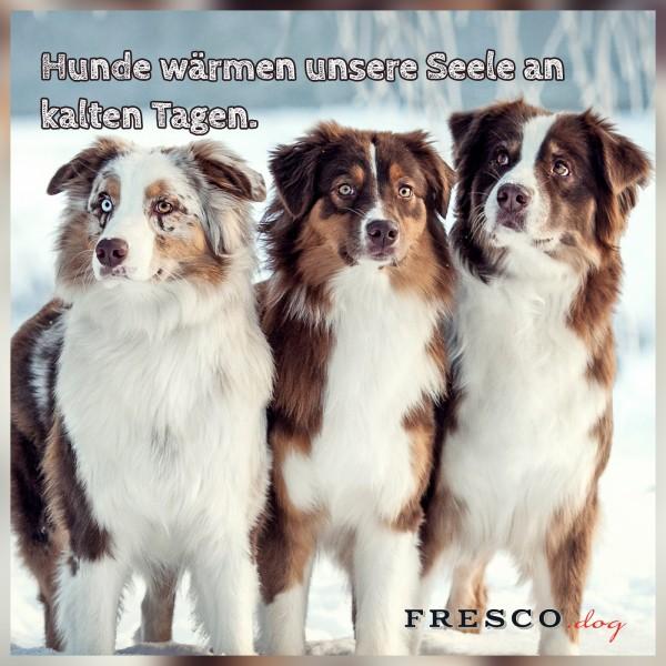 1212_Hundespruch_kalte_Tage_Facebook