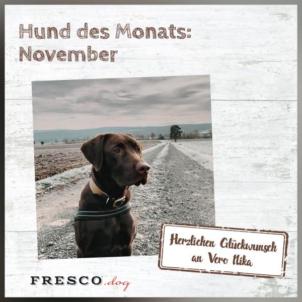 03_Hund-des-Monats