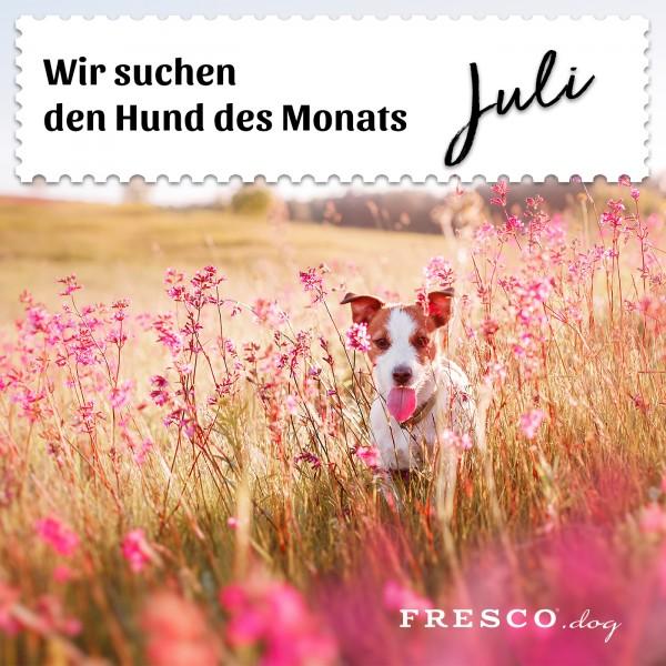 Hund-des-Monats-Juli