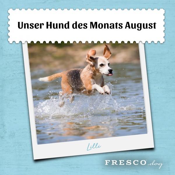 Hund-des-Monats-August-Sieger-Kopie