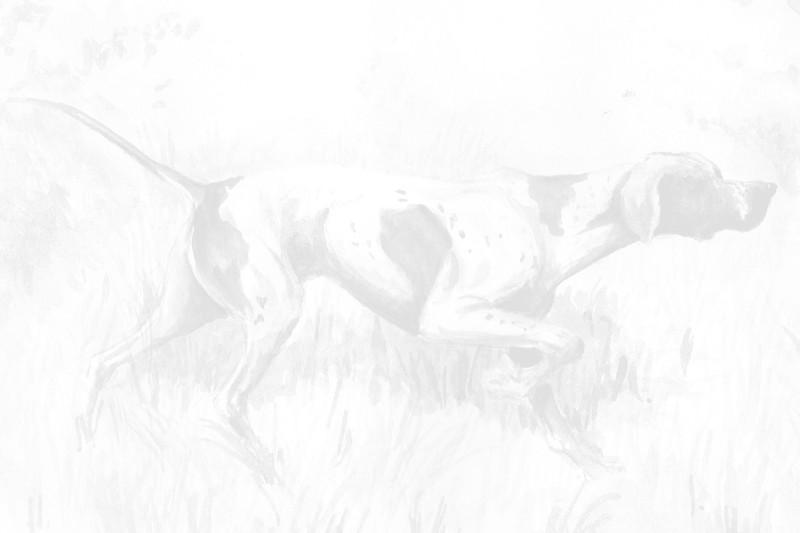 Pferdeziemer