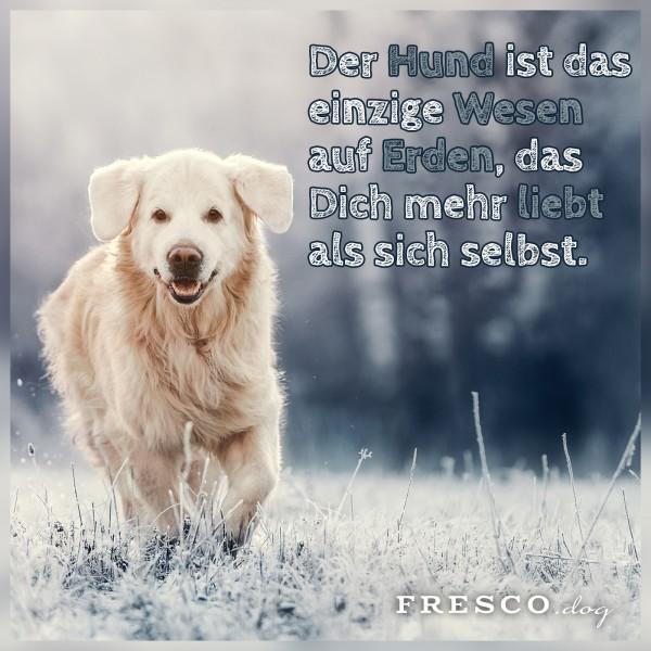 1217_Hundespruch_Facebook