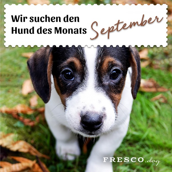 Hund-des-Monats-September