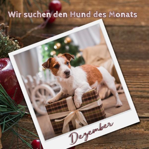 1204_Aufruf_Hund_des_Monats_Facebook5fc75cddb1502