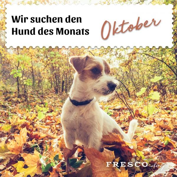 Hund_des_Monats_Oktober