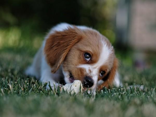 Zahnpflege_Hund