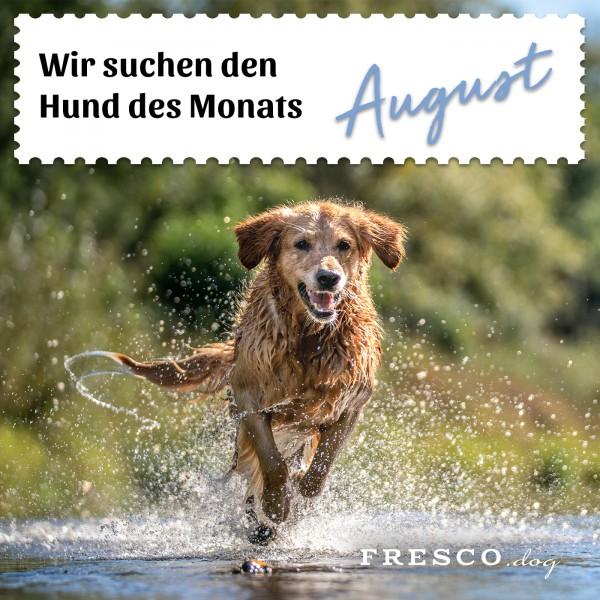 Hund-des-Monats-August